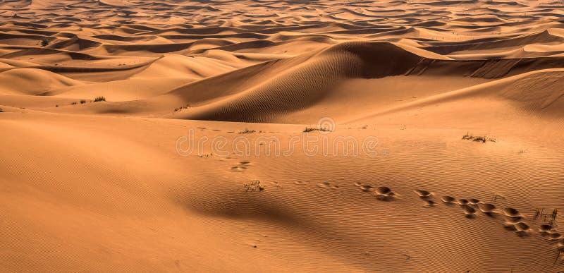 Выдержка захода солнца пустыни около Дубай, Объединенных эмиратов стоковая фотография rf