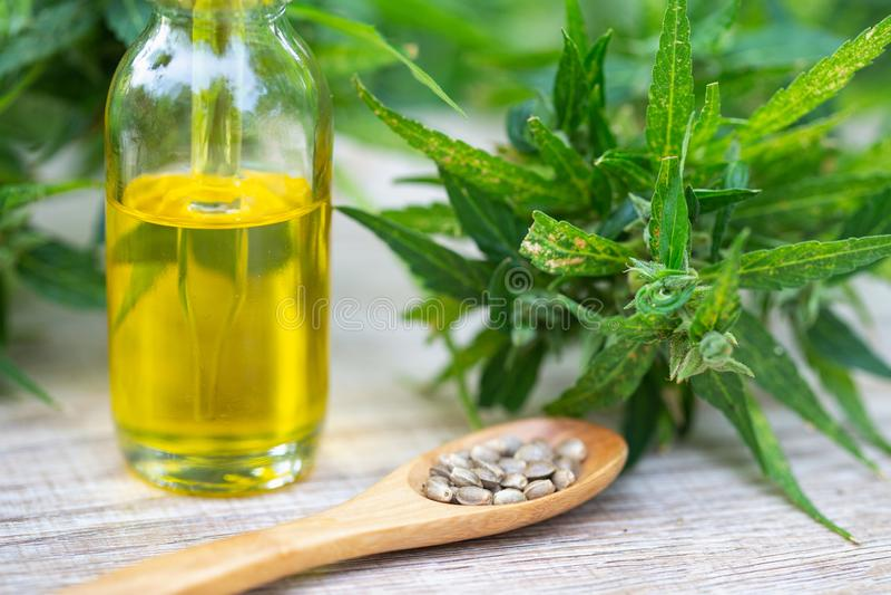 Выдержка конопли масла CBD, масло пеньки бутылки и цветки пеньки на деревянном столе, медицинской концепции конопли стоковая фотография rf