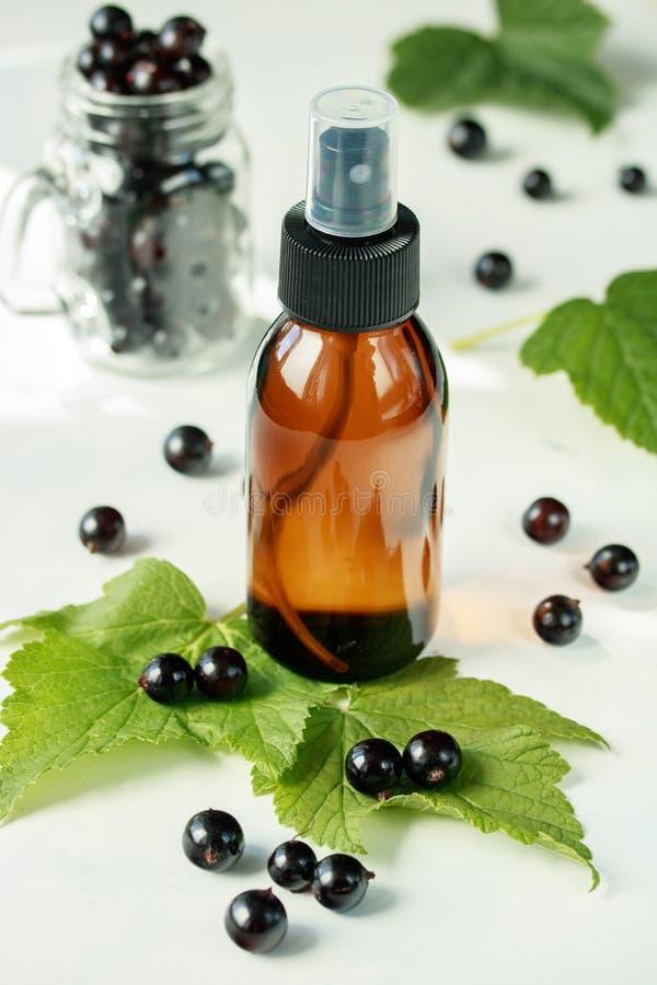 Выдержка черной смородины в бутылке для косметической пользы ароматерапии стоковая фотография
