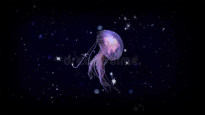Вызывают перемещаясь животные зоопланктоном которого пришли в размеры alll, от крошечных водорослей и бактерий, других зародышей  стоковые фото