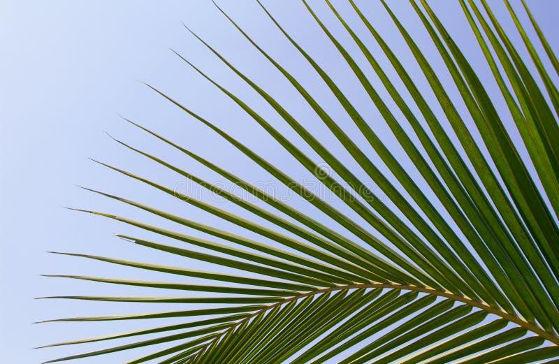 выйдите ладонь тропическим стоковые изображения rf