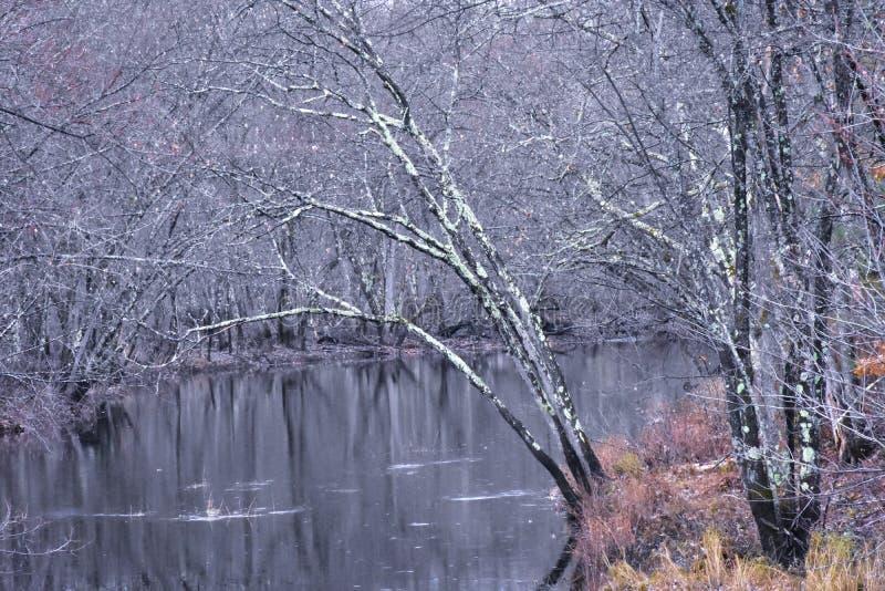 Выйдите меньше деревьев показывая изменяя сезоны стоковое фото rf
