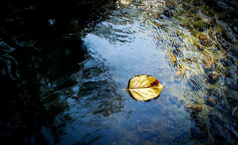 Выйдите на свежую воду стоковые фото