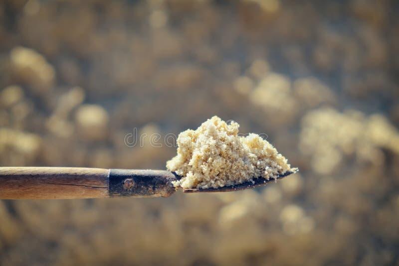 Выкопать в песке лопаткоулавливатель стоковые фото