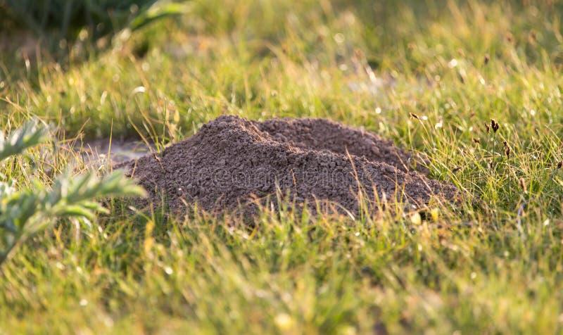 Выкопенная экскаватором природа моли почвы стоковое фото rf
