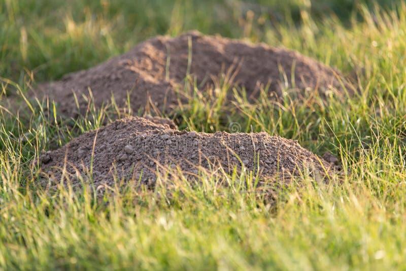 Выкопенная экскаватором природа моли почвы стоковые фотографии rf