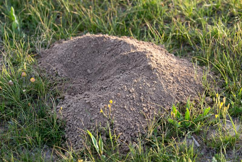 Выкопенная экскаватором природа моли почвы стоковая фотография rf