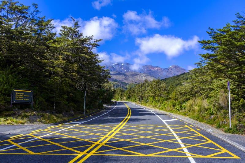 Вымощенная дорога в лесе стоковые изображения