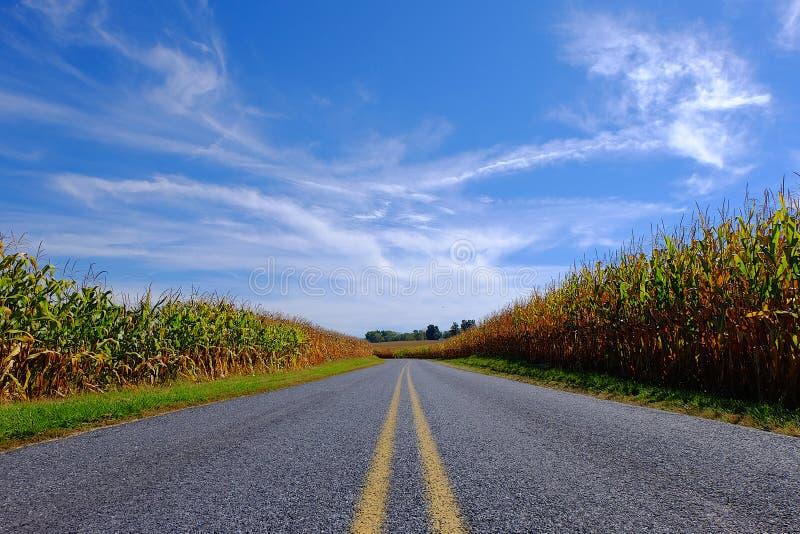 Вымощенная дорога через кукурузное поле стоковые фотографии rf