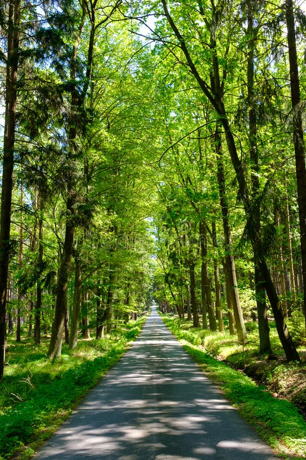 Вымощенные доступы в город леса стоковые изображения