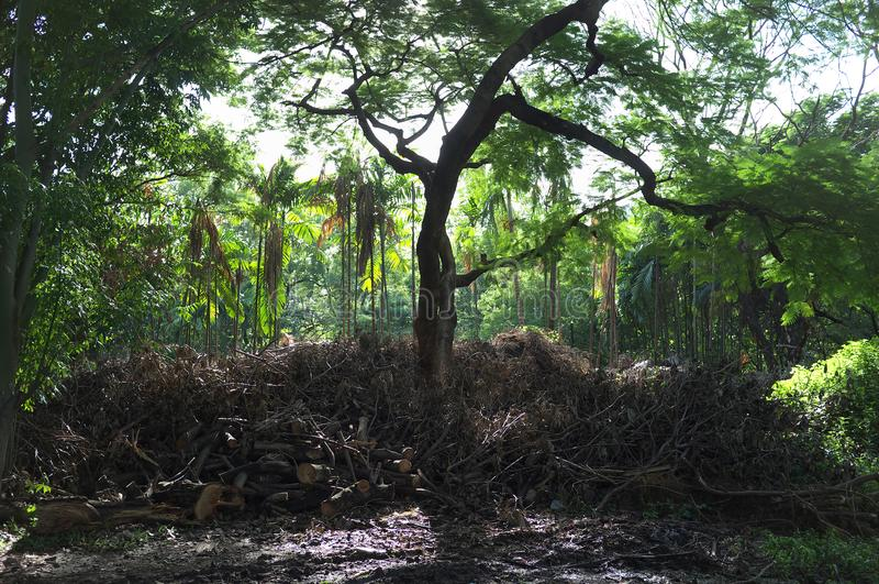 Выпадать где-то в лесе интереса стоковые изображения rf