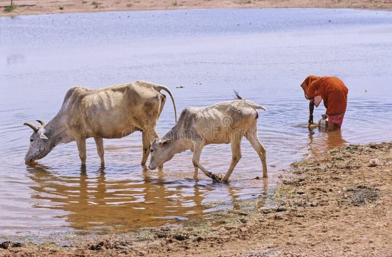 выпивая вода Раджастхана стоковое изображение