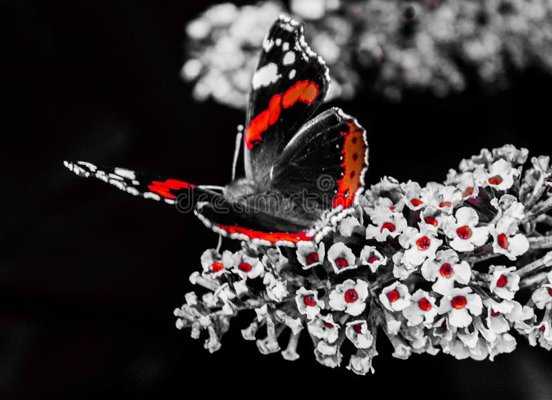 Выплеск бабочки стоковые изображения rf