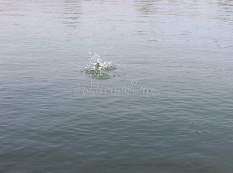 Выплеск воды в воде с камнем стоковые изображения