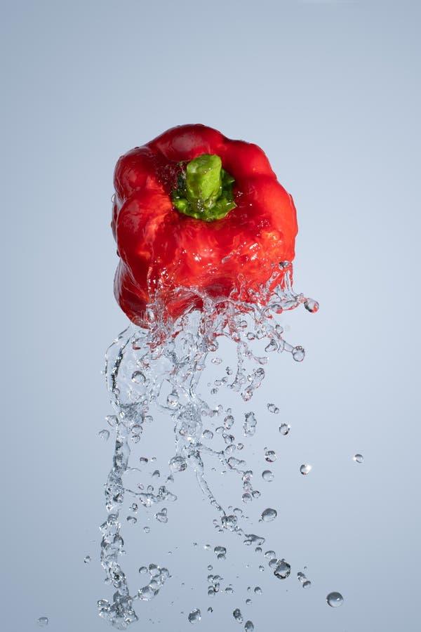 Выплеск воды под красным болгарским перцем стоковая фотография