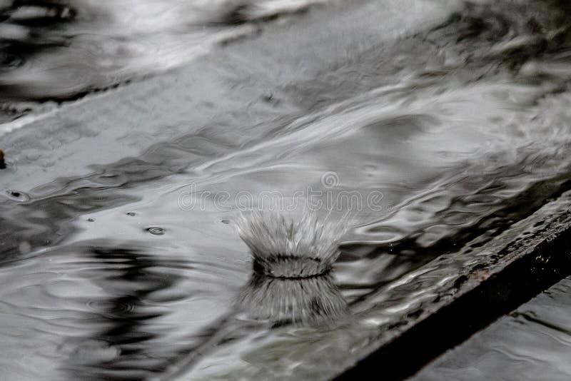 Выплеск падения дождя в деревянном поле отскакивая и формируя крона воды стоковые изображения rf