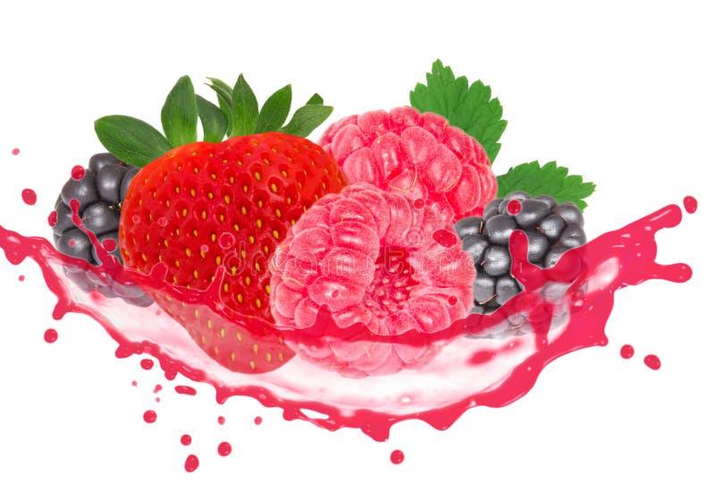 Выплеск ягоды стоковая фотография