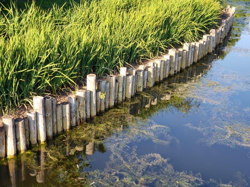 Выпушка берега пруда деревянная стоковое изображение