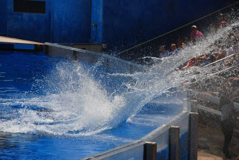 Выплеск в мире моря стоковая фотография rf
