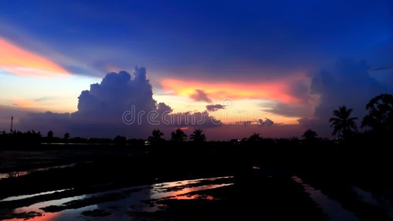 Выравниваясь небо с силуэтом леса стоковое фото