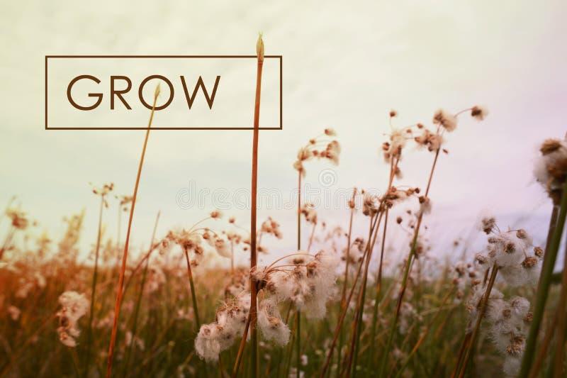 Вырастите предпосылка wildflower цитаты концепции стоковая фотография rf