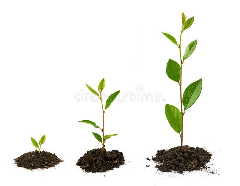 Выращивание растения стоковое изображение rf