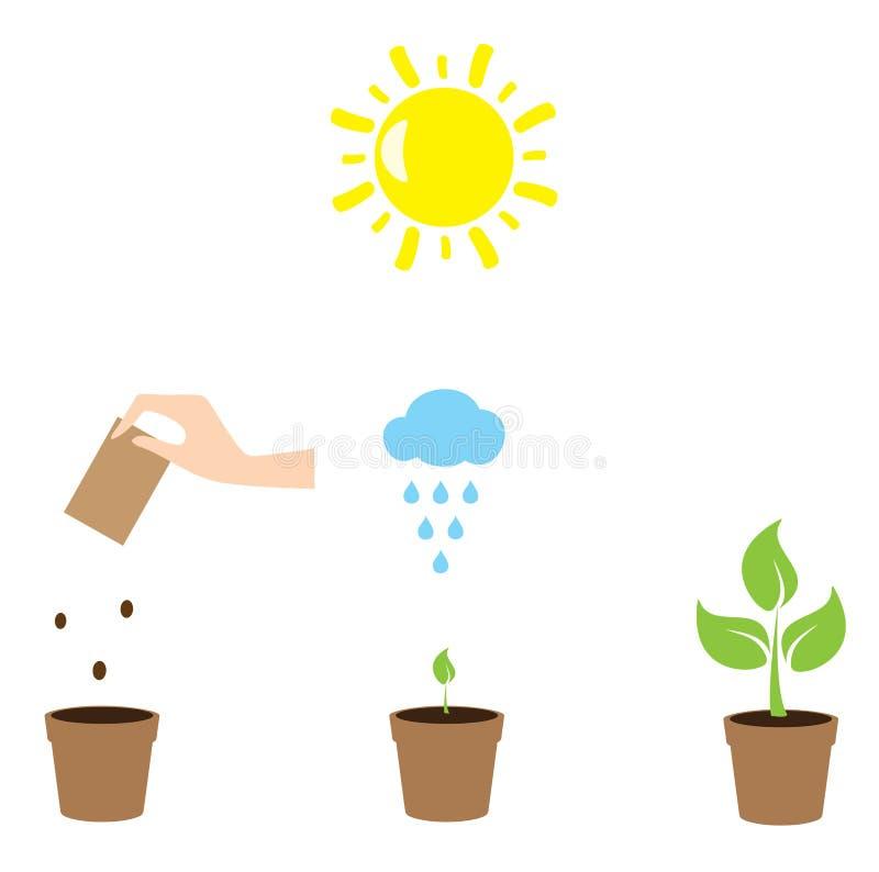 Выращивание растения иллюстрация вектора