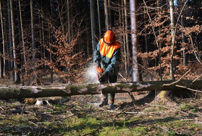 вырезывание соединяет woodcutter вала стоковое фото rf
