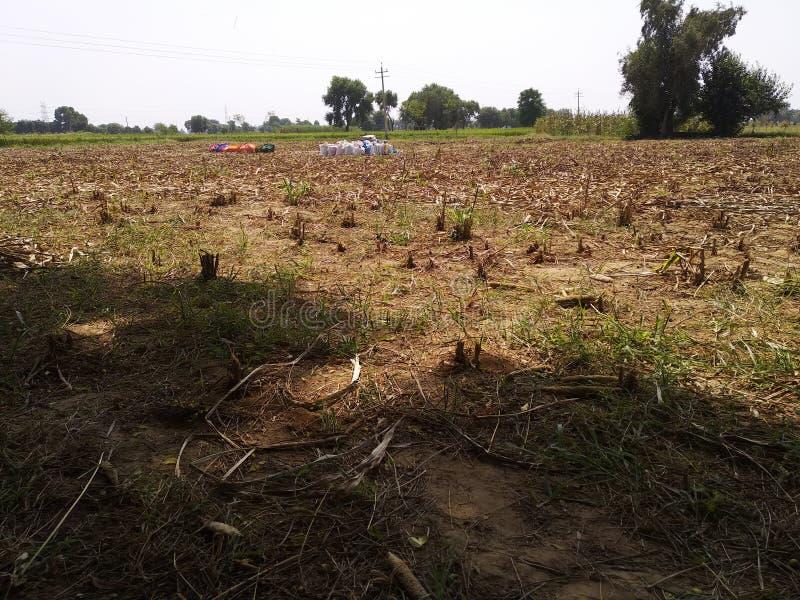 Вырезывание урожая пшеницы стоковое фото
