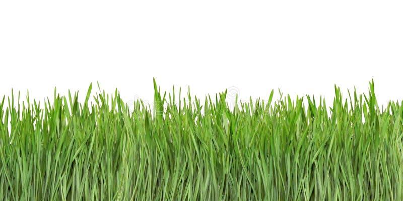 Вырез лезвий травы стоковые фото