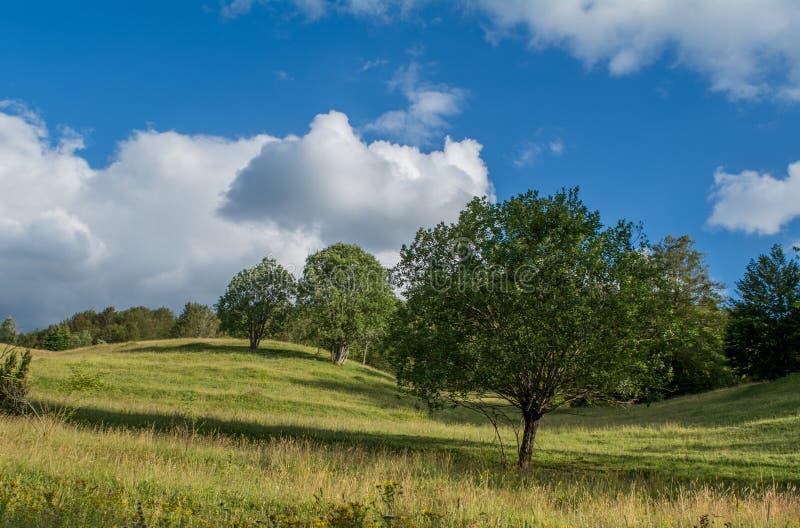 Выровнянный вверх по деревьям стоковое фото
