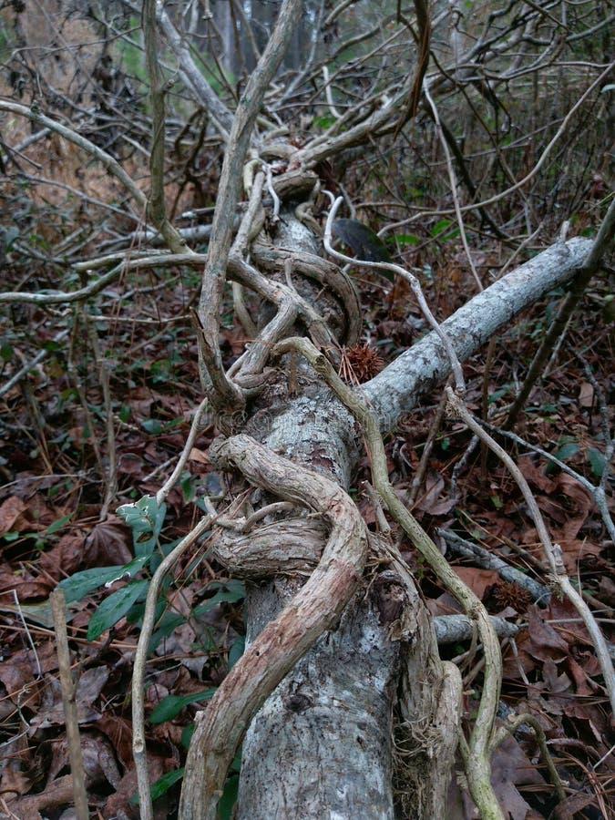 Выросли ветви, который одичалый стоковое фото