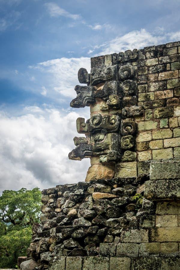 Высекаенная деталь на майяских руинах - археологические раскопки Copan, Гондурас стоковое изображение
