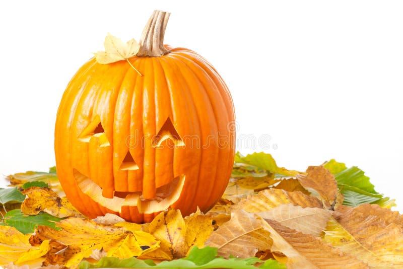 высеканный фонарик o jack halloween стоковое изображение