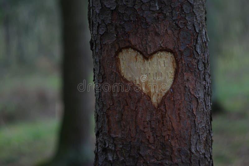 Высекать сформированный сердцем стоковое изображение