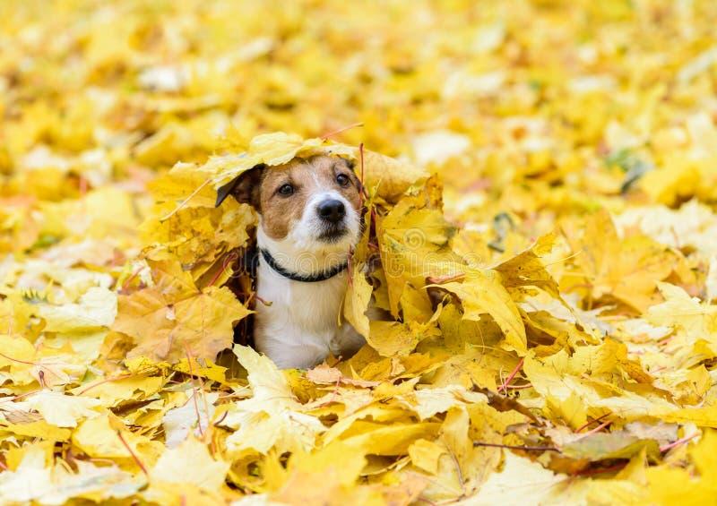 Выследите лежать вниз похороненный под желтыми упаденными листьями осени стоковые изображения