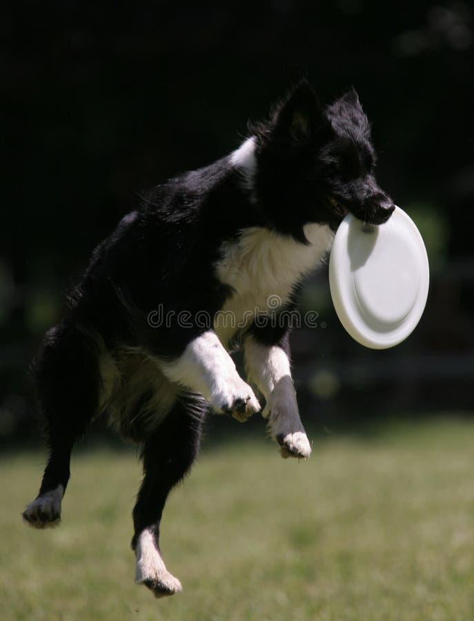 выследите скачки frisbee стоковое изображение rf