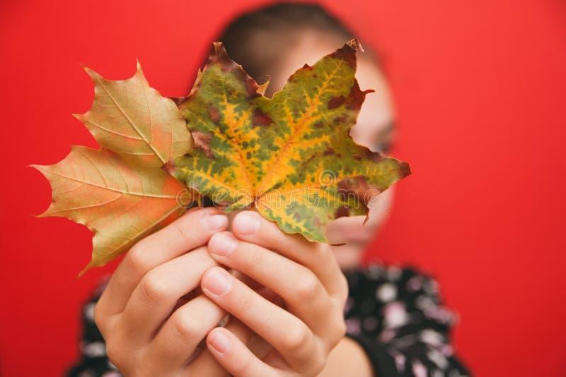 Высокая осень, девушка держащ яркие кленовые листы вне на длине ` s руки на красной предпосылке стоковые фотографии rf