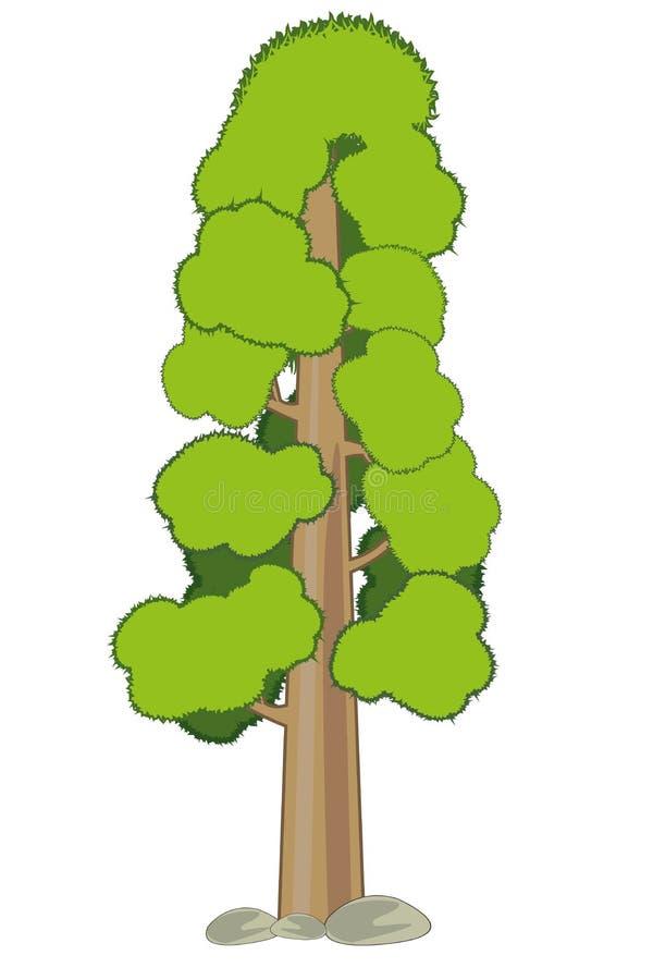 Высокая секвойя дерева на белой предпосылке изолирована иллюстрация вектора