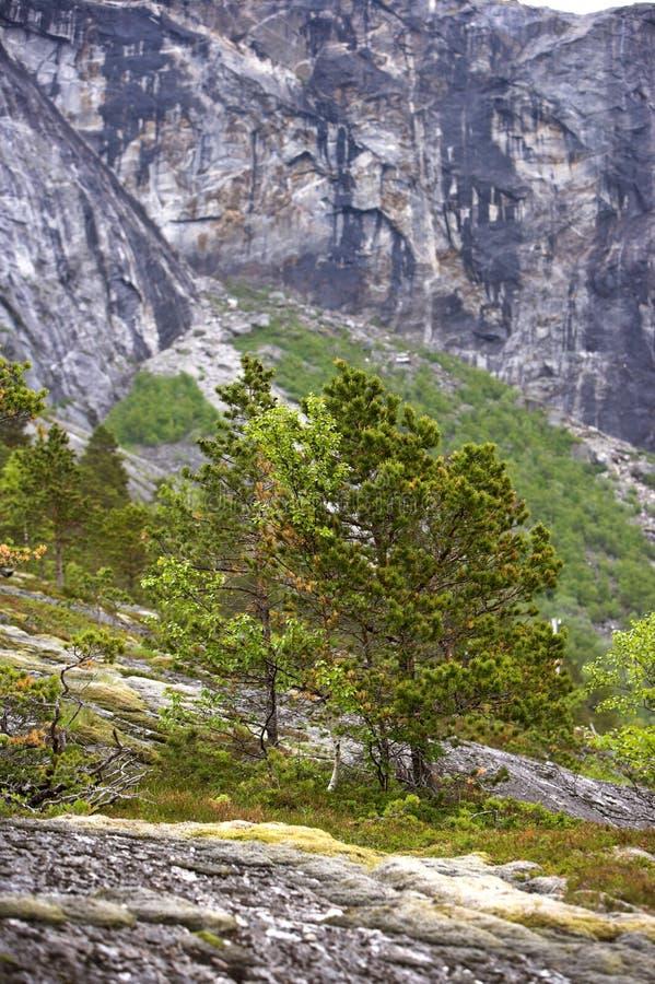 высокие горы земли стоковая фотография