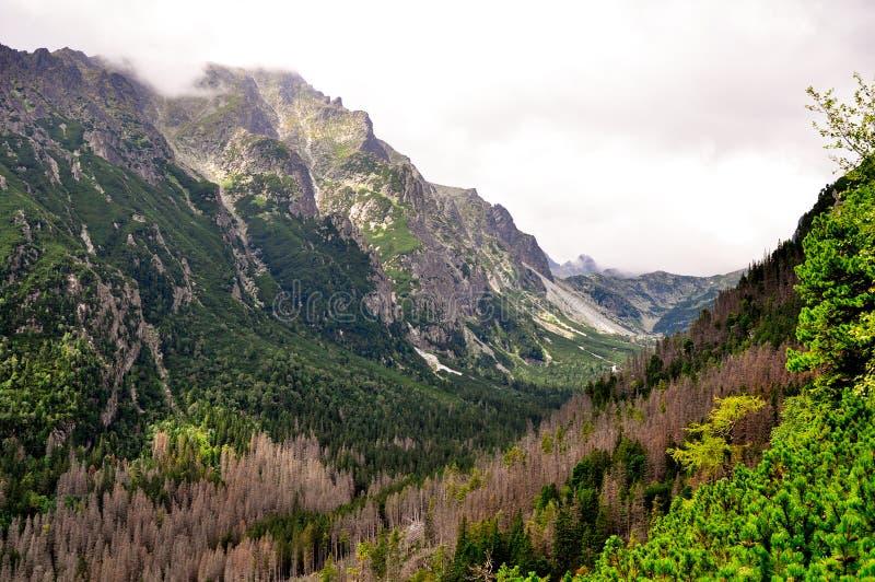 Высокие горы tatras, Словакия стоковое изображение rf