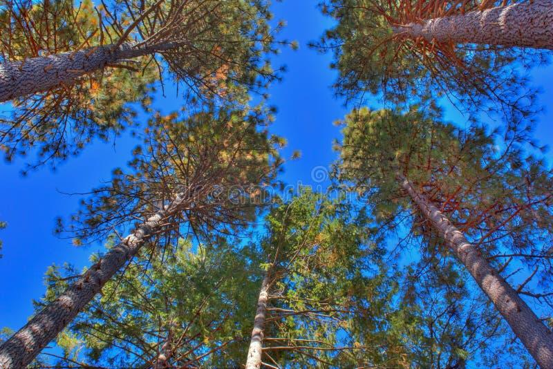 Высокие деревья в лесе стоковое фото