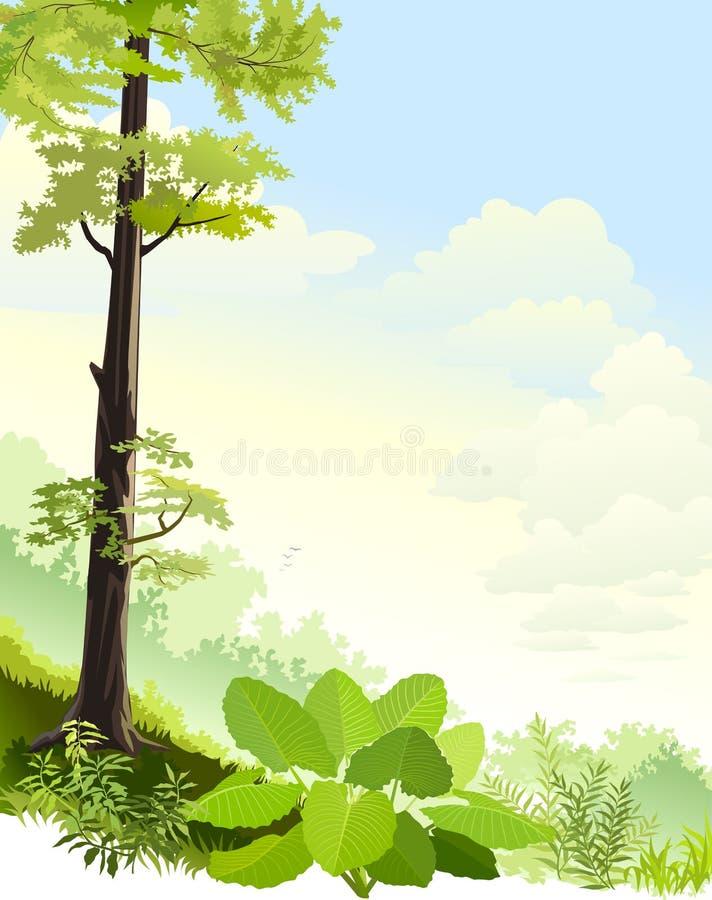 Высокие деревья в дождевом лесе Амазонки бесплатная иллюстрация