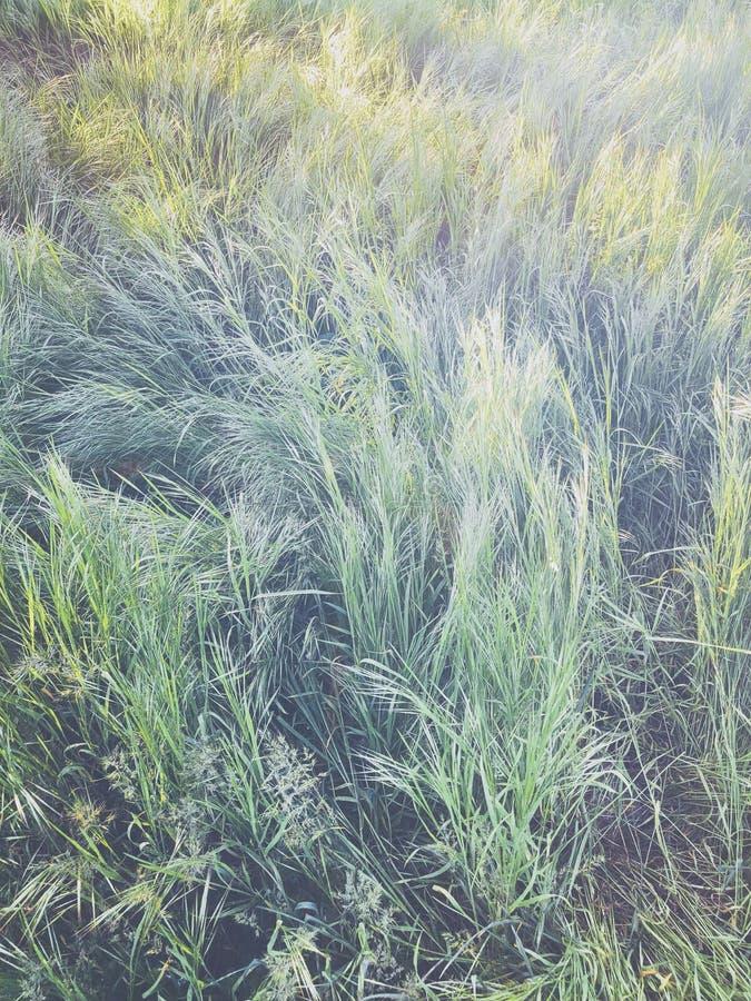 Высокий свежий сад зеленой травы весной, естественное абстрактное textur стоковое изображение
