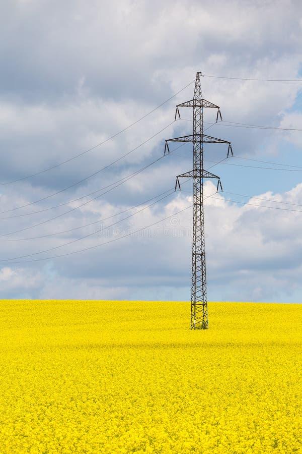 Высоковольтные шины в желтом поле рапса Природа и технология стоковые фото