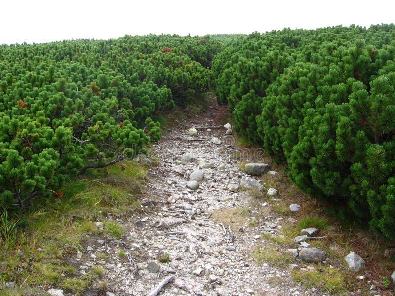 высокогорная вегетация стоковая фотография