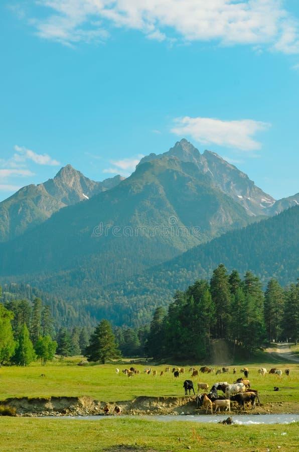 высокогорная гора стоковая фотография