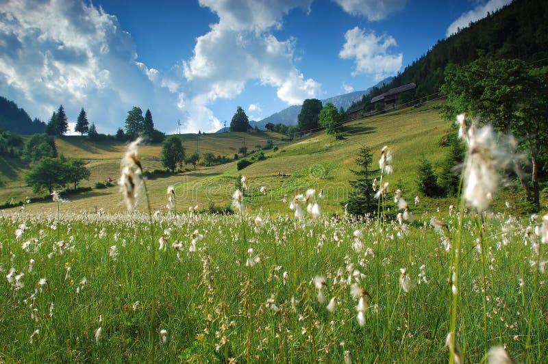 высокогорная долина весны стоковые фотографии rf