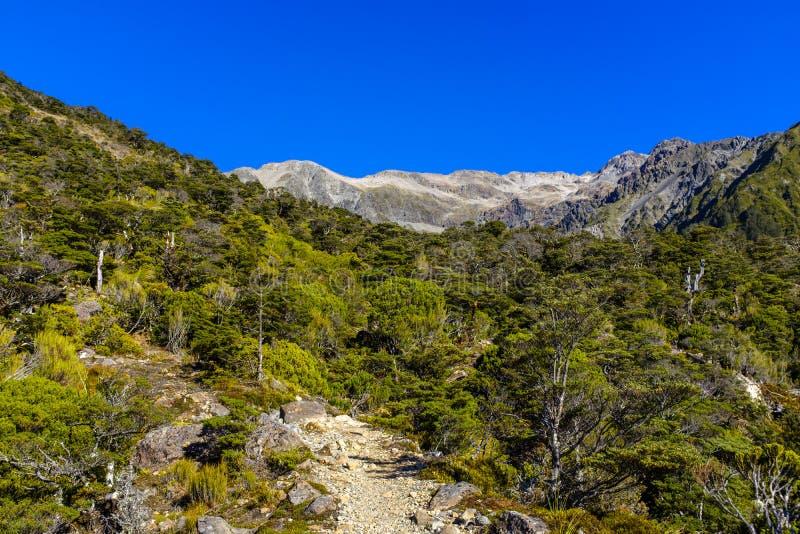 Высокогорная окружающая среда горы в Новой Зеландии стоковые фотографии rf