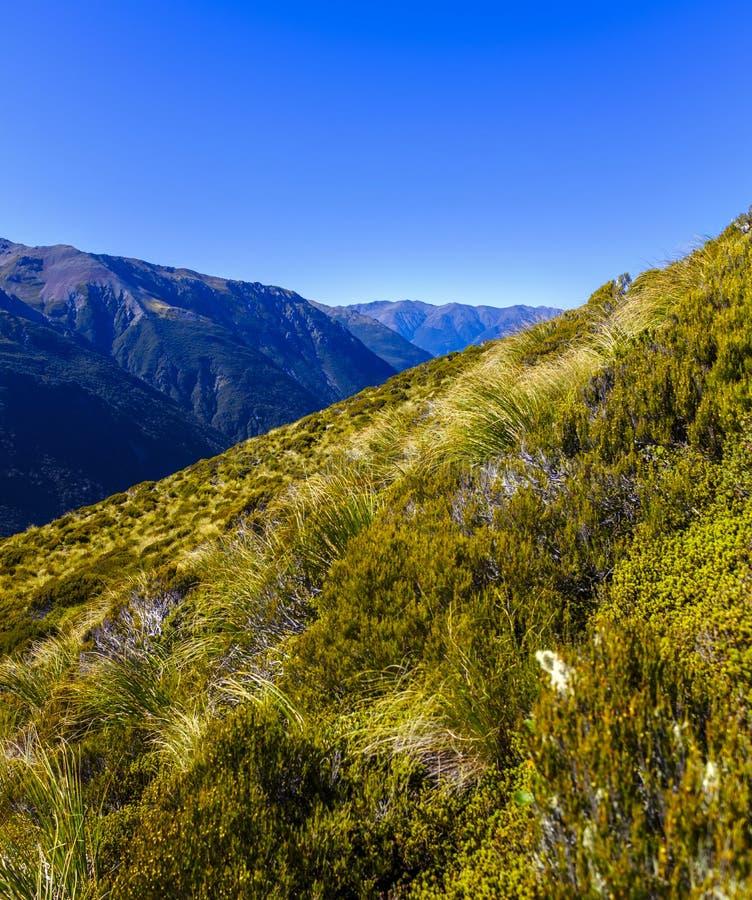 Высокогорная окружающая среда горы в Новой Зеландии стоковая фотография rf